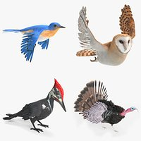 Animated Bird Collection