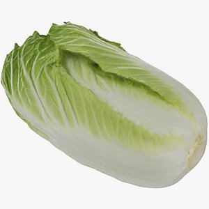 chinese cabbage 3D model