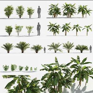 3D Plants Pack 5: Rainforest: GrowFX