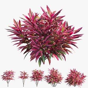 cordyline fruticosa plant set 3D model