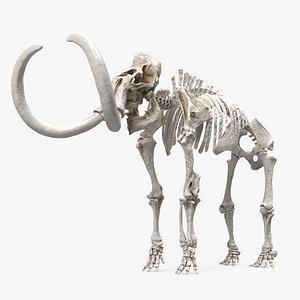 3D model Mammoth Skeleton Clean Bones