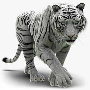 3D model White Tiger 2 FUR Rigged