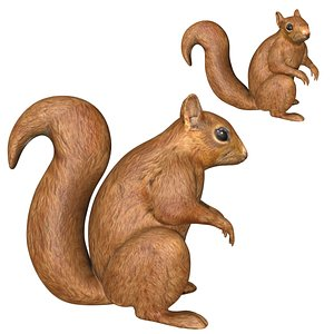 Fully rigged low poly Squirrel 3D model