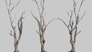 3D model Dead tree20210914