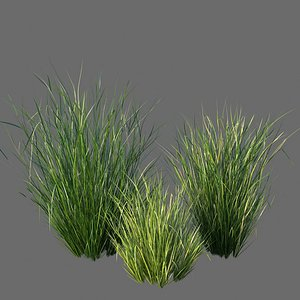 XfrogPlants Sand Cordgrass - Spartina Bakeri 3D model