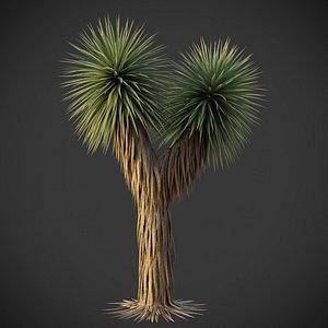 3D XfrogPlants Beaked Yucca - Yucca Rostrata
