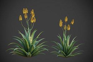 XfrogPlants Aloe Vera - Aloe Barbadensis 3D model