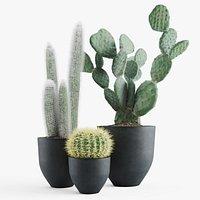 Cacti In Concrete Pots