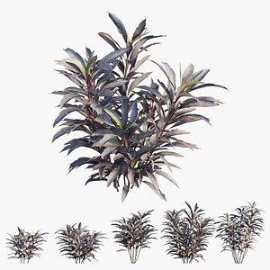 cordyline fruticosa plant tree 3D model