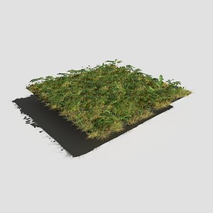 3D ashweed meadow patch model