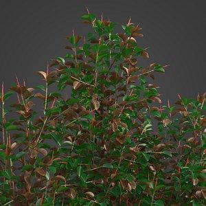 2021 PBR Rubber Tree Collection - Ficus Elastica 3D model