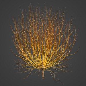 3D 2021 PBR Golden Willow Collection - Salix Alba Vitellina model