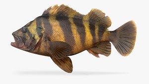 3D treefish fish