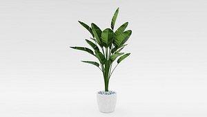3D bird paradise plant strelitzia