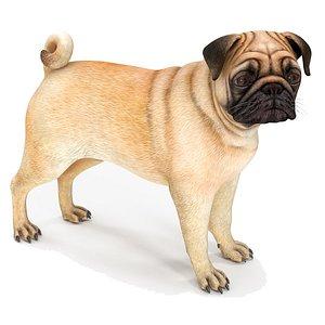 3D pug dog rigged modo model