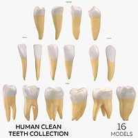 Human Clean Teeth Collection  - 16 models