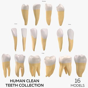 3D Human Clean Teeth Collection  - 16 models