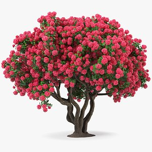 3D Rhododendron Red Tree