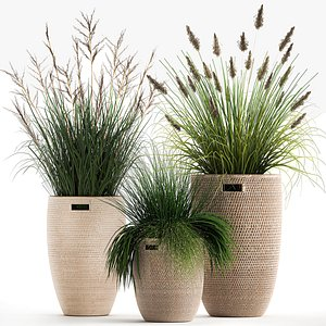 3D Ornamental reeds plants in rattan baskets 1027