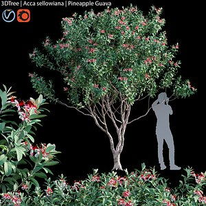 3D Acca sellowiana