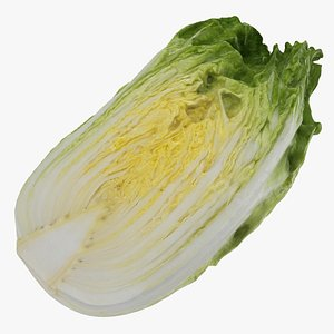 chinese cabbage half model