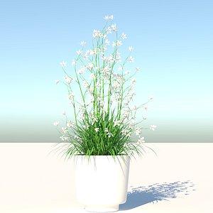 3D Flower and Pot model