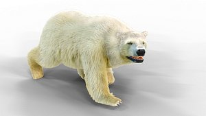 3D model WhiteBearFurAnimated Fur
