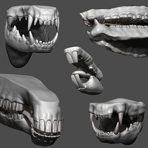 Animal Mouth ZBrush Sculpt Collection 3D model