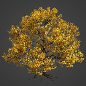 2021 PBR Pear Tree Collection - Pyrus Communis 3D