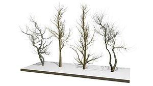 bare tree 3D model