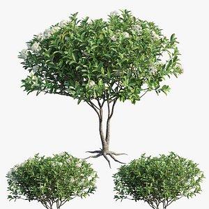 3D plant set 24
