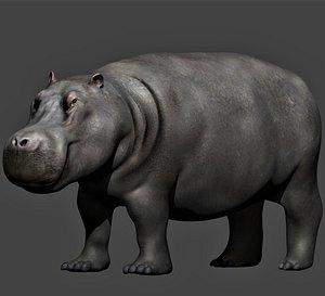 realistic rigged hippopotamus 3D model