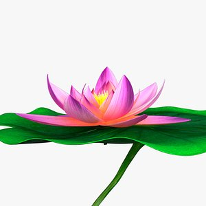 3D blooming lily animation model