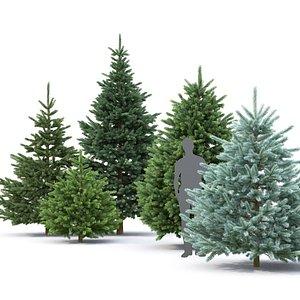 3D model spruce trees pungens