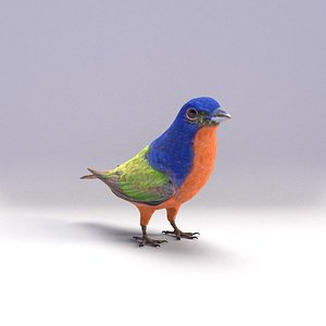 painted bunting 3D