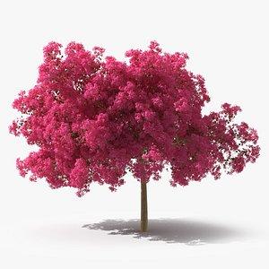 Handroanthus Impetiginosus Foliage 3D model