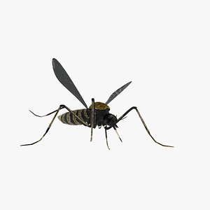 mosquito insect 3D