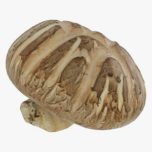 shiitake mushroom 3D model