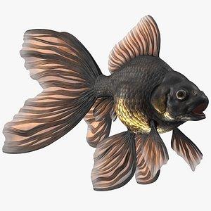 Black Moor Goldfish model