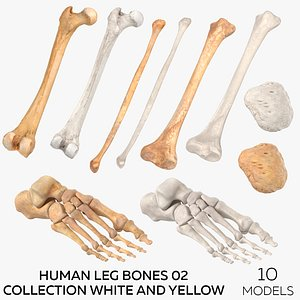 Human Leg Bones 02 Collection White and Yellow - 10 models 3D
