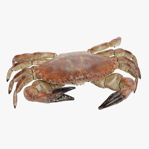 edible crab rigged 3D model