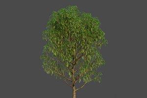 3D XfrogPlants Banana Leaf Fig - Ficus Alii