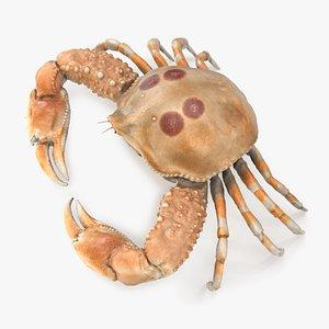 Pebble Crab 3D model