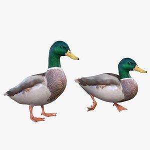Mallard Duck Male 3D model