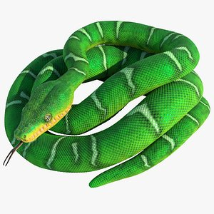 Emerald Tree Boa Rigged Animated 3D model