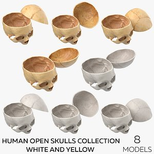 Human Open Skulls Collection White and Yellow - 8 models model