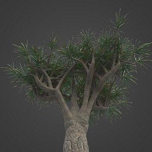 3D 2021 PBR Tree Aloe Collection - Aloe Bainesii
