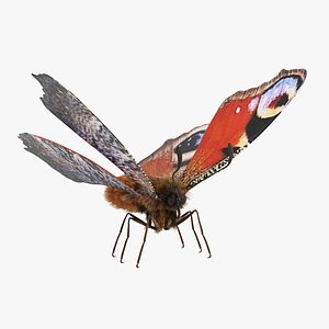 Peacock Butterfly Rigged 3D model