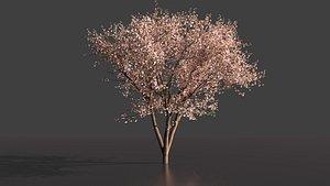 3D cherryBlossom tree