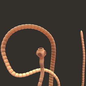 worm tapeworm model